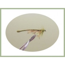 Olive Dragon Fly