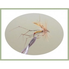 Red Tip Daddy Long Legs