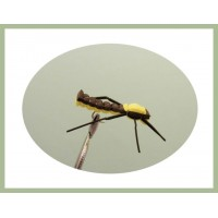 Brown and Yellow Grasshopper