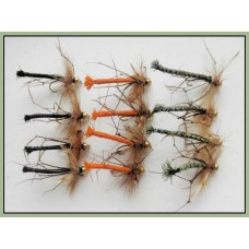 12 Goldhead Daddy Long Legs, Detached Coloured