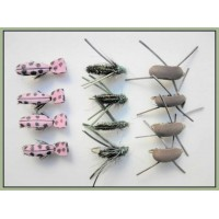 12 Beetles, Peacock,Pink Lady, Brown Gum
