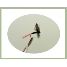 Black Red Tailed Gnat