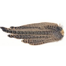 Hen Pheasant Complete tail