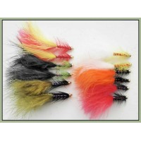 12 Goldhead Dancer, Mixed Colours
