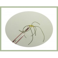 Olive Spandex Spider  - (beaded apps)