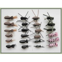 24 Mixed beetles